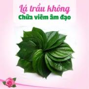 La Trau Khong Chua Viem Am Dao