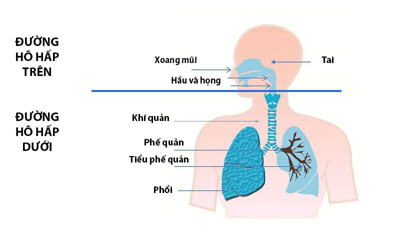 He Thong Duong Ho Hap