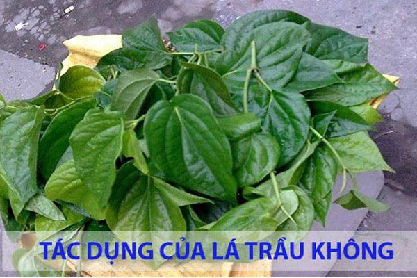 la-tra-khong-co-tac-dubng-chua-benh-gi