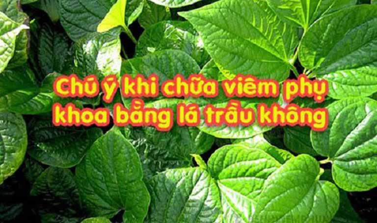 luu-y-ki chua-viem-phu-khoa-bang-la-trau-khong