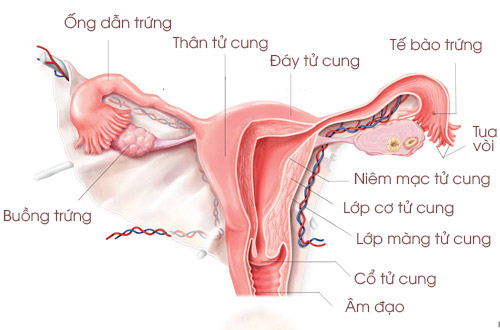 Cau Tao Buong Trung