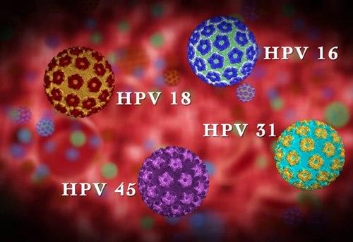 Virus Hpv La Gi Khi Nu Vo Tinh Mac Phai